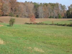 Darnell Farm meadow
